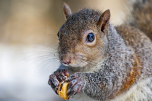 Backups Becoming Squirrelly